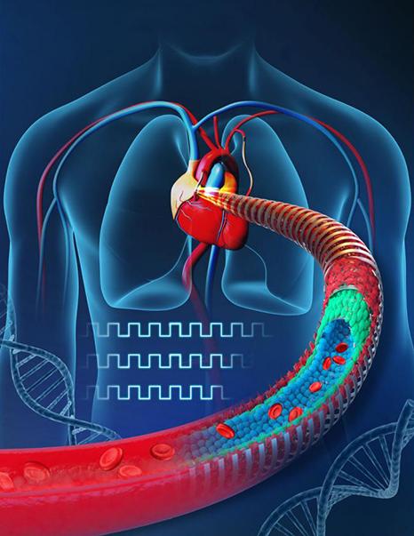 عروق مصنوعی خونی + نرم افزار ارولوژی